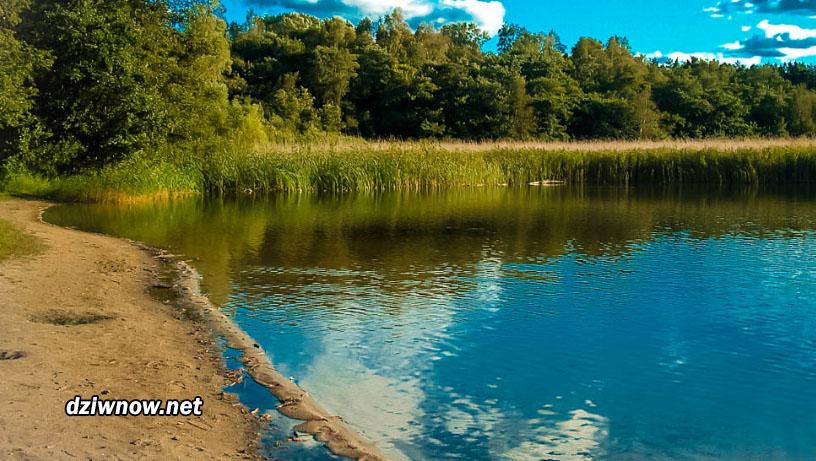 Rezerwat przyrody w Dziwnowie. Dziwnów atrakcje przyrodnicze.